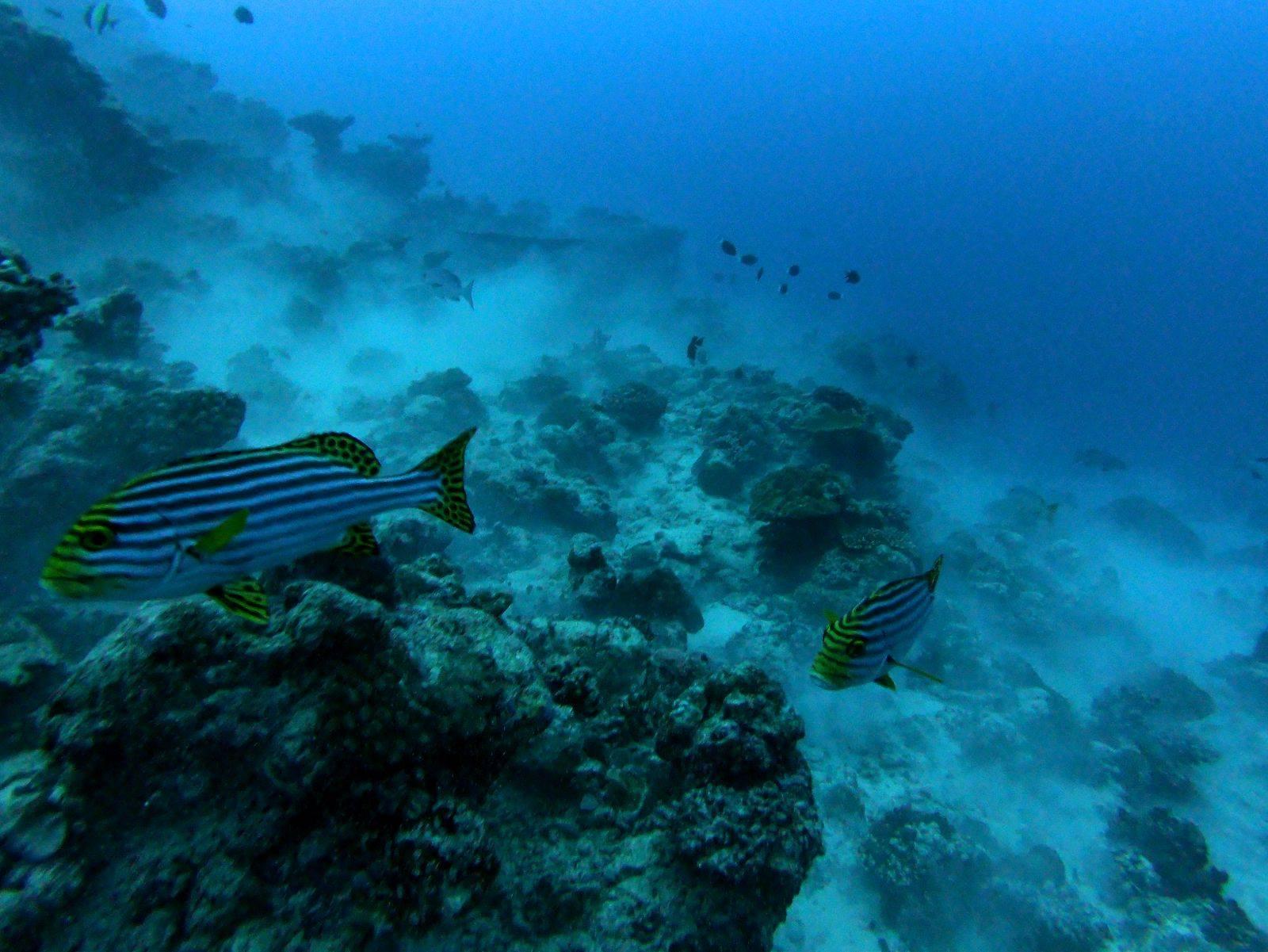 night diving thoddoo maldives Ночной дайвинг мальдивы тодду