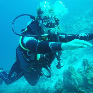 diving Thoddoo