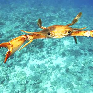 underwater world Indian ocean